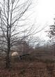 Лиственный крупномер Дуб черешчатый (Дуб обыкновенный) (Quercus robur) - 113