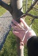 Лиственный крупномер Липа мелколистная (Tilia cordata) - 104