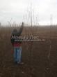 Лиственный крупномер Рябина обыкновенная (Sorbus aucuparia) - 108