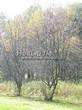 Лиственный крупномер Рябина обыкновенная (Sorbus aucuparia) - 111