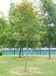 Лиственный крупномер Рябина обыкновенная (Sorbus aucuparia) - 112