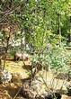 Лиственный крупномер Рябина промежуточная (Sorbus intermedia) - 103