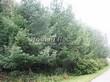 Посадка крупномеров Лиственницы европейской (Лиственницы опадающей) (Larix decidua) - 224