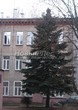 Посадка крупномеров Ели колючей (Picea pungens) (Ели голубой) - 219