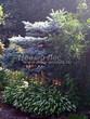 Посадка крупномеров Ели колючей Глаука Глобоза (Picea pungens 'Glauca Globosa') - 220