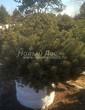 Посадка крупномеров Сосны горной (Pinus mugo) - 211