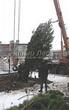 Посадка крупномеров Сосны обыкновенной (Pinus sylvestris) - 201