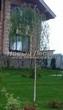 Посадка крупномеров Березы повислой (бородавчатой) Юнга (Betula pendula 'Youngii') - 202