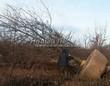 Посадка крупномеров Дуба черешчатого (Дуба обыкновенного) (Quercus robur) - 204