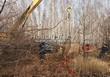 Посадка крупномеров Дуба черешчатого (Дуба обыкновенного) (Quercus robur) - 208