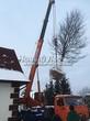 Посадка крупномеров Дуба черешчатого (Дуба обыкновенного) (Quercus robur) - 210