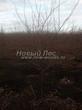 Посадка крупномеров Черемухи виргинской (Prunus virginiana (Padus virginiana)) - 208
