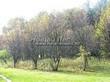 Посадка крупномеров Рябины обыкновенной (Sorbus aucuparia) - 212