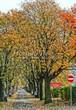 Крупномеры лиственные Рябина промежуточная