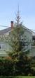 Хвойное дерево Ель обыкновенная у загородного дома: Ивантеевка, Московская область