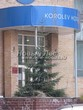 Посадка дерева Ель обыкновенная в городе у гостиницы