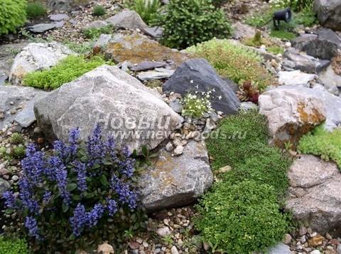 Высадка растений на альпийской горке среди камней, имитация высокогоорного альпийского сообщества