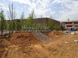 Озеленение промышленной территории деревьями и кустарником