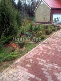 Посадка саженцев декоративных растений в рамках озеленения (после окончания работ)