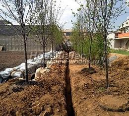 Озеленение территории: посадка аллеи деревьев и зелёной живой изгороди из кустарника вдоль границы участка (до начала работ)