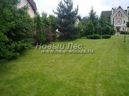 Зеленый декоративный газон уложенный у загородного дома в Подмосковье
