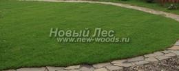 Газонная лужайка посреди садового участка с садовыми дорожками