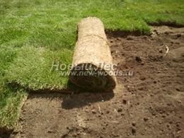 Озеленение: рулонный газон используемый в ландшафтном дизайне