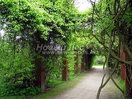 Вертикальное озеленение арочной перголы вьющимися растениями (лианами)