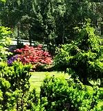 Ландшафтный дизайн: озеленение и благоустройство(посадка деревьев и кустарников, укладка газонов, посадка живых изгородей)