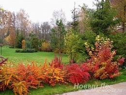 Живые изгороди: бордюр (низкая живая изгородь) из свободно растущих кустарников