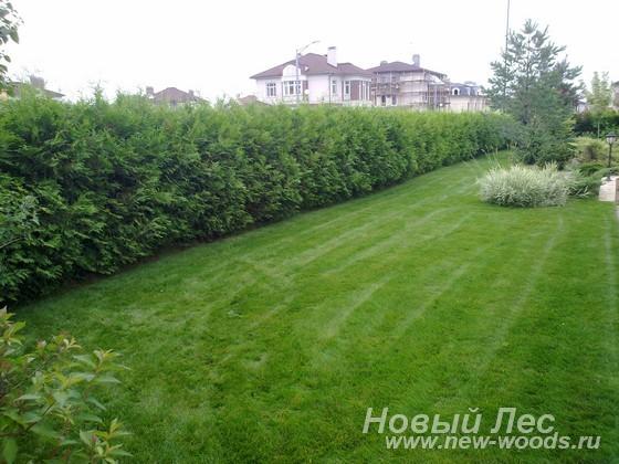 Дизайн изгородей фото