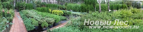 Питомник крупномеров - Садово-ландшафтный центр Дружба, Московская область, Мытищи, поселок Дружба