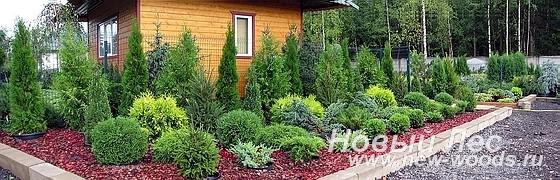 Садово-ландшафтный центр Дружба - Посадка растений