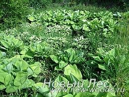 Питомник растений - декоративные растения