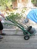 Посадка небольшого растения требует небольших усилий (и стоит недорого)