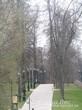 Лиственные деревья, высаженные в аллею при закладке парка