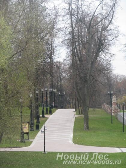 200-летние деревья, посаженные в аллею (Москва, Царицынский парк)