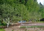Посадка крупномеров плодовых деревьев