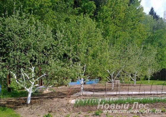 Посадка плодовых крупномеров на участке