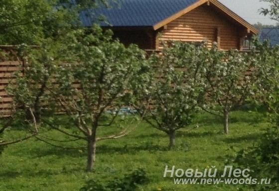 Посадка плодовых крупномеров (яблони)