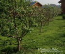 Посадка плодовых крупномеров в саду